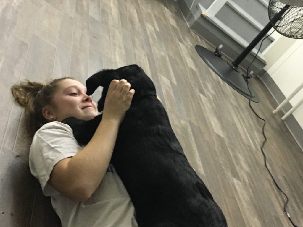 Animal Rescue includes cuddling with these sweet pups.