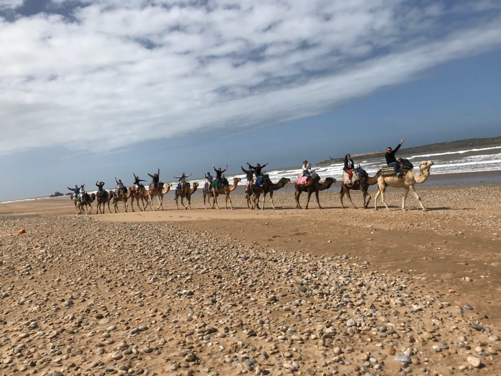 New Hampton Morocco Camels