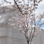Marting Luther King Memorial Washington DC